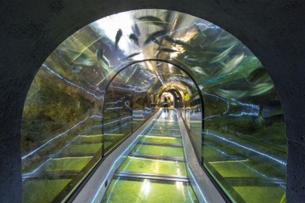 Aquarium Huisduinen