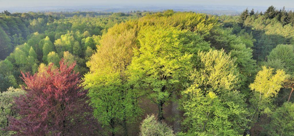 Kaapse Bossen natuurgebieden in nederland