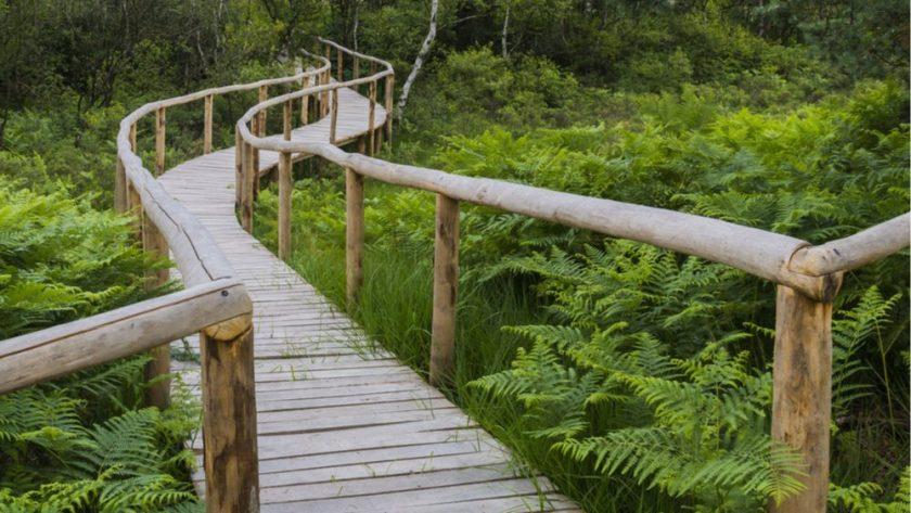 Nationaal-Park-de-Meinweg-