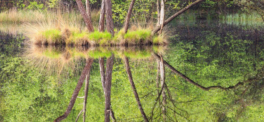 Oisterwijkse Bossen natuurgebieden in nederland