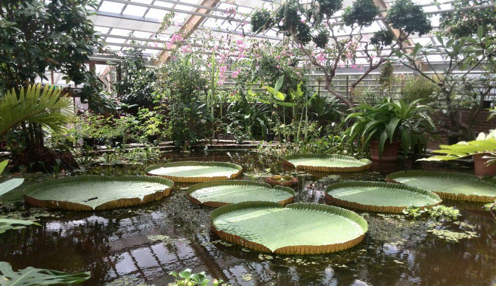 Hortus Botanicus Leiden Amsterdam