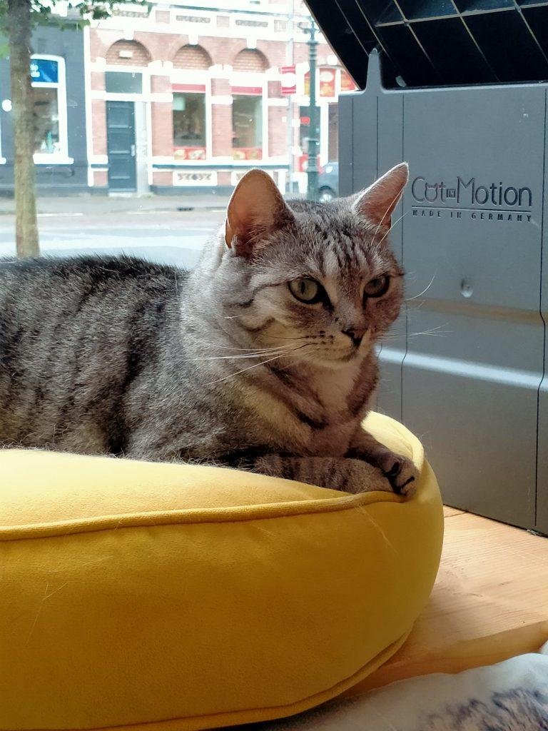 Kattencafé Familie Snorhaar